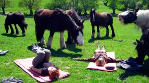 Stage yoga et cavaliers au domaine de Firfol