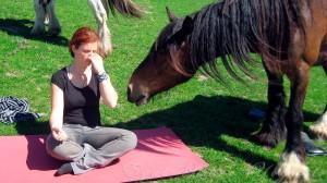 Stage yoga et cavaliers au domaine de Firfol - Mai 2012